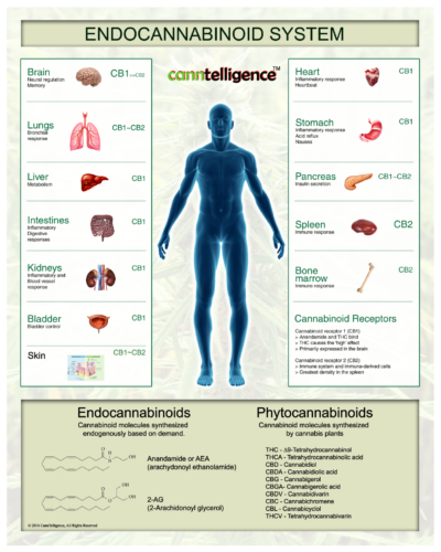 The Endocannabinoid System and Hemp