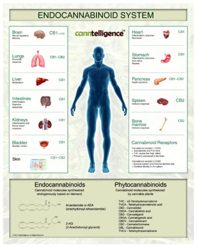 The Endocannabinoid System and Hemp
